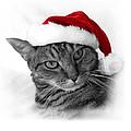 Christmas Cat 2 by Helene U Taylor