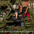 Christmas Cat by Guy Whiteley