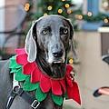 Christmas Dog by Cynthia Guinn