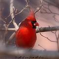 Christmas Greetings - Cardinal by Travis Truelove