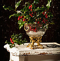 Christmas Holly by Amanda Elwell