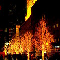 Christmas In New York - Trees And Star by Miriam Danar