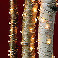 Christmas Lights On Birch Branches by Elena Elisseeva