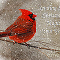 Christmas Magic Cardinal Card by Lois Bryan