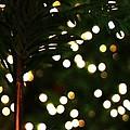 Christmas Palm by Linda Shafer