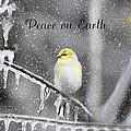 Christmas Peace by Linda Segerson