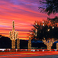Christmas, Phoenix, Arizona, Usa by Panoramic Images