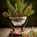 Christmas Pine by Amanda Elwell