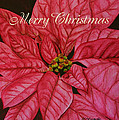 Christmas Poinsettia by Marna Edwards Flavell