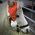 Christmas Pony by Fran Gallogly