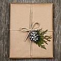 Christmas Present  by Elena Elisseeva
