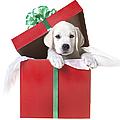 Christmas Puppy by Diane Diederich