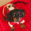 Christmas Puppy by Kay Pickens