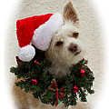 Christmas Puppy by Photography by Laura Lee