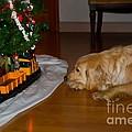 Christmas Train by Frank J Casella