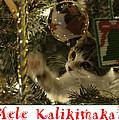Christmas Tree Cat Card by Dan McManus