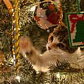 Christmas Tree Cat by Dan McManus