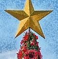 Christmas Tree by George Atsametakis