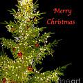 Christmas Tree Lighting by Jim And Emily Bush