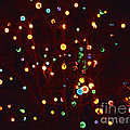 Christmas Tree Lights by Marian Bell
