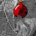 Christmas Tree Squirrel With Red Ornament by Dominic White