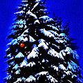 Christmas Tree With Red Ball by CHAZ Daugherty