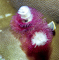 Christmas Tree Worms 2 by Dawn Eshelman
