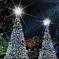 Christmas Trees by Lilliana Mendez