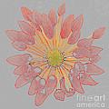 Chrysanthemum As Coloured Pencil Drawing by Rosemary Calvert