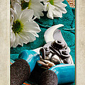 Chrysanthemum Cuttings by John Edwards