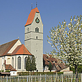 Church And Blooming Apple Tree by Matthias Hauser