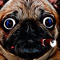 Cigar Puffing Pug - Electric Art by Wingsdomain Art and Photography