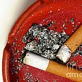 Cigarette Butts by Amy Cicconi