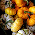Cinderella Pumpkin Pile by Kerri Mortenson