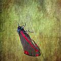 Cinnabar Moth Art Texture Wall Decor. by Chris Smith