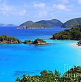 Cinnamon Bay St. John Virgin Islands by Catherine Sherman