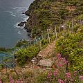 Cinque Terre Terraces In Spring by Michele Steffey