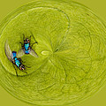 Circle Of Flies by Jean Noren
