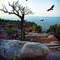 Circling Vultures by Jill Battaglia