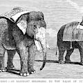 Circus Elephants, 1884 by Granger