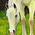 Cisco Sees Horse Art by Blenda Studio
