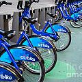 Citibike Rentals Nyc by Amy Cicconi