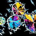 Citric Acid Crystals In Polarized Light by Stephan Pietzko