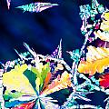 Citric Acid Microcrystals Color Abstract Art by Stephan Pietzko