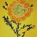 Citrus Fruit by Juanita  Albert