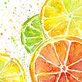Citrus Fruit Watercolor by Olga Shvartsur
