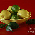 Citrus Passion by Inspired Nature Photography Fine Art Photography