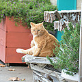 City Kitty by Jan Amiss Photography