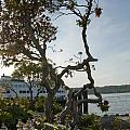 City Of Bremerton Waterfront Park by Davina Parypa