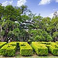 City Park New Orleans Louisiana by Kathleen K Parker